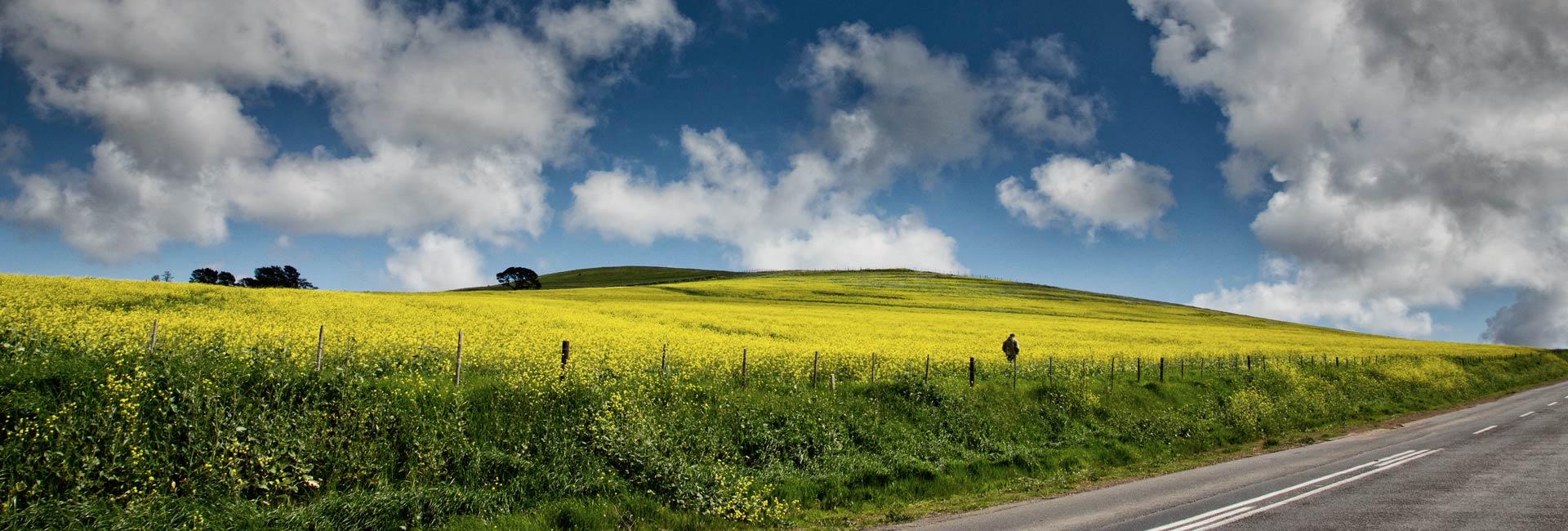 darling-romery-landscape